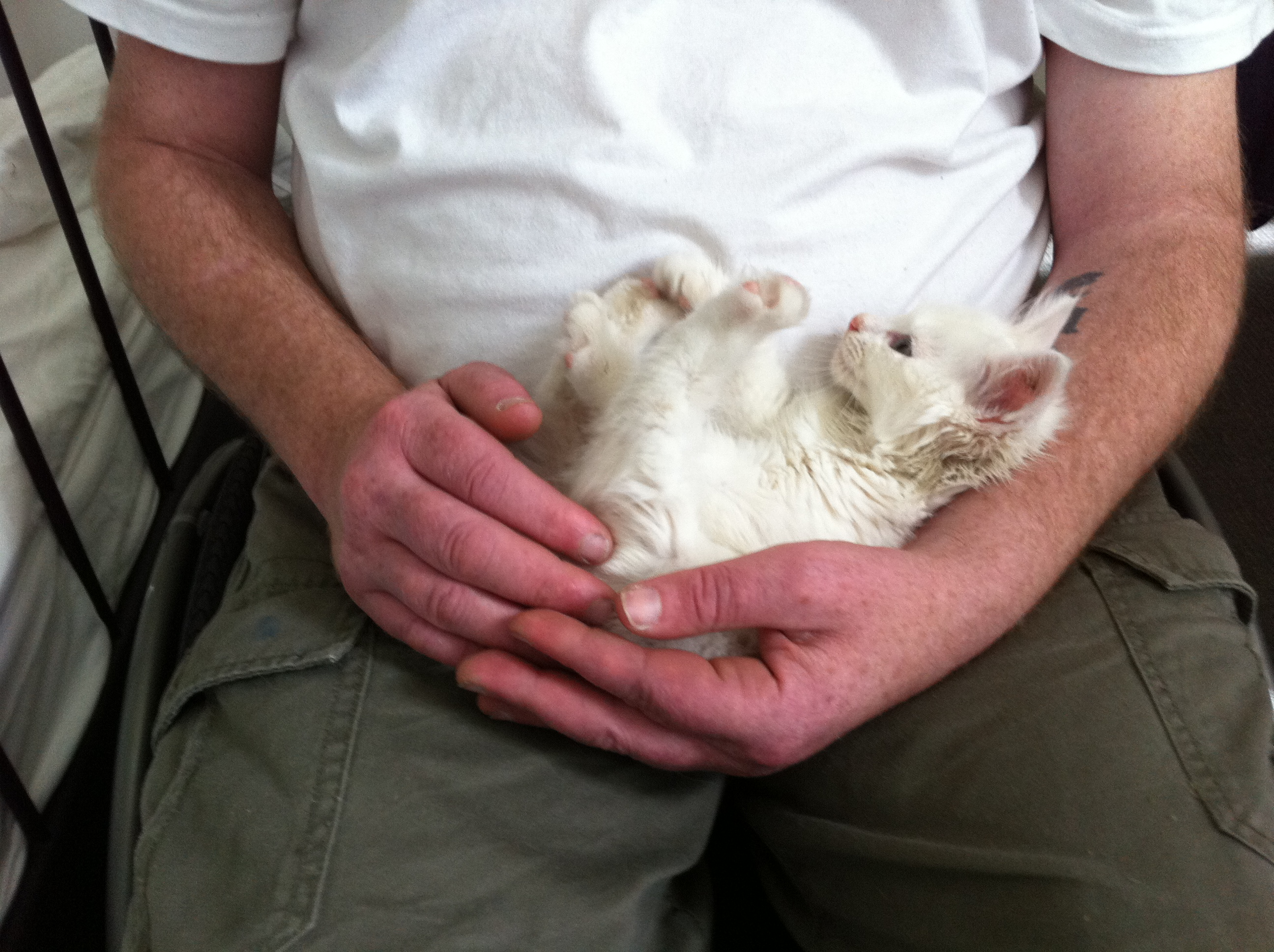 How To Treat Deaf Cat Img
