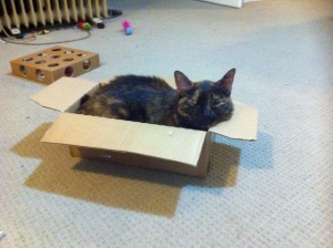Saffron steals box